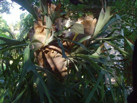 Baha Ammes Apartments: plant