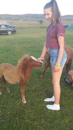 Balloch O' Dee Campsite: Ponies roaming in the field :-)