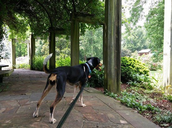 The Greensboro Arboretum: Dog friendly gardens!
