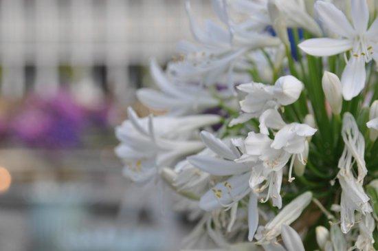 Tivoli Gardens: Цветы
