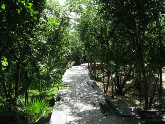 The Cove Eleuthera: pathway from Bush View Room
