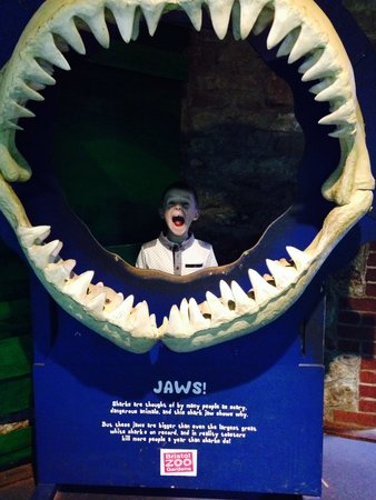 Bristol Zoo Gardens: Jake having fun at the zoo :)