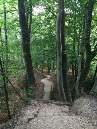 Perchingbar : Promenons nous dans les bois !