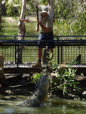 Hartley's Crocodile Adventures: Feeding demo
