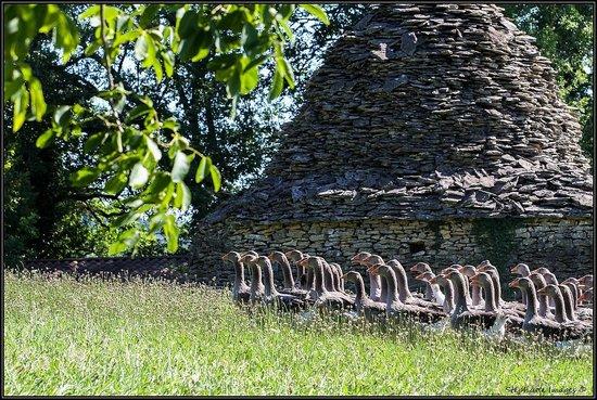 Domaine de la Rhonie : Une cabane
