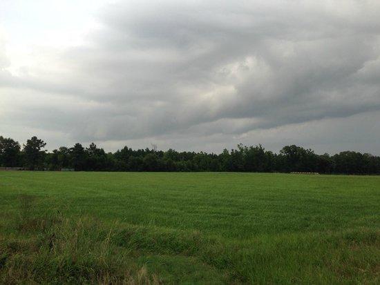 Lufkin RV Resort : View to the north