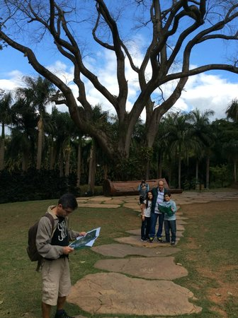 Inhotim : Nós tentando decidir o que visitar primeiro... Ao fundo palmeiras e a imponência dessa árvore im