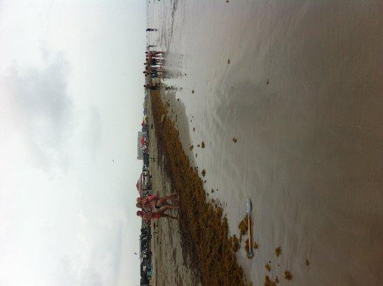 Port Aransas Beach: Yuk!