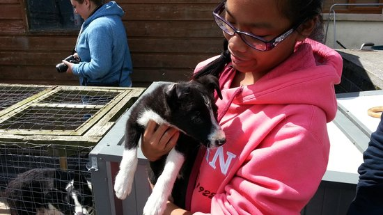 Joyce Country Sheepdogs: My daughter loving Blackjack, 2 months old sheepdog