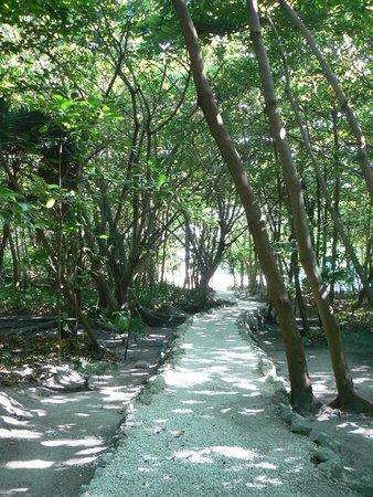 Museo Maya de Cancun: Beautiful, shaded path through ruins
