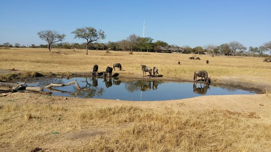 Nkorho Bush Lodge: Nkorho watering hole