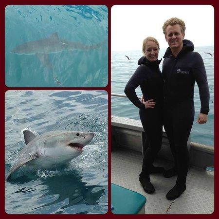 Marine Dynamics: Shark bait, hoo ha ha!
