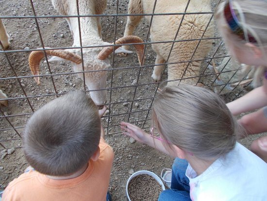 The Lazy 5 Ranch: The petting/feeding area was lots of fun!