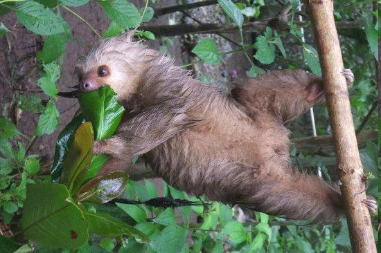 Tree of Life Wildlife Rescue Center and Botanical Gardens: Sloth
