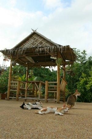 Oasis Villa: Hut