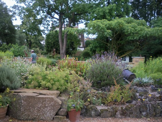 Chelsea Physic Garden: This is Pond Rockery. In the middle, are Pitcher plants