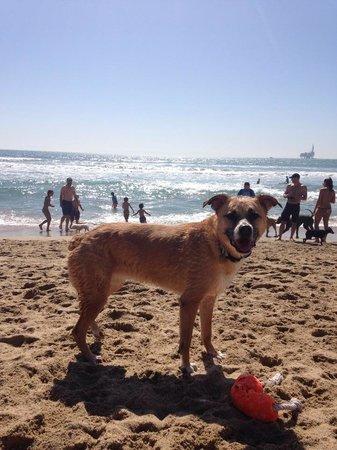 Huntington Dog Beach: best dog beach this pup has found on either coast!