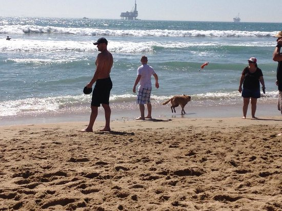 Huntington Dog Beach: playing fetch in the waves