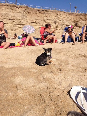 Huntington Dog Beach: cliffs that back the beach and safely enclose loose dogs