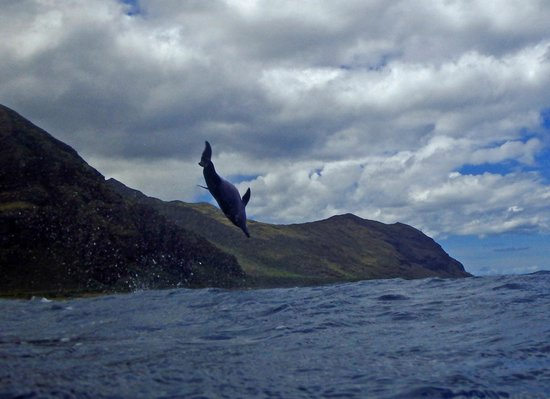 Wild Side Specialty Tours: Jumping dolphin!