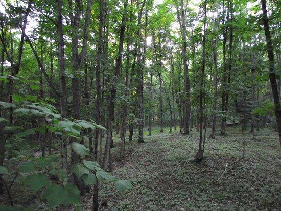 Charlton Lake Camp: The trail behind the camp