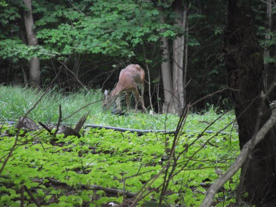 Charlton Lake Camp: We spotted a deer during our walk!