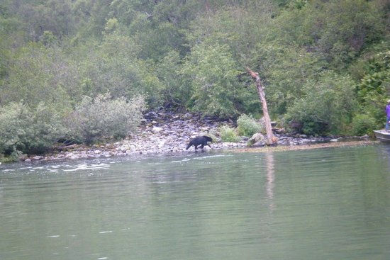 Talon Air Service: The area where we sit and wait (small cove)...the bear is AT the brook/ boats are all around us