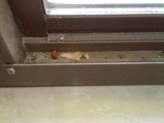 LK Motel/Budget Inn : Bugs in window ledge