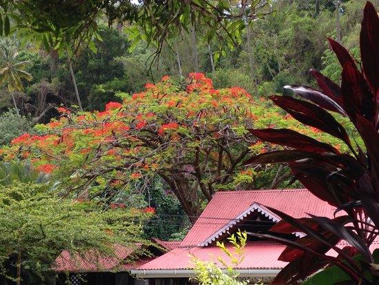 Fond Doux Plantation & Resort : Beautiful surrounding