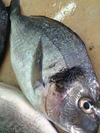 Chouchou: privilegier le poisson