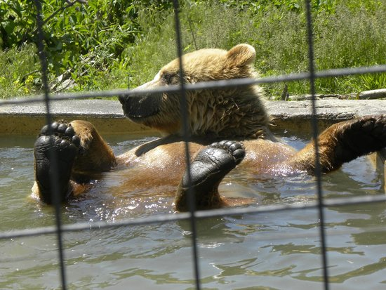 Kamloops Wildlife Park: Spa Day