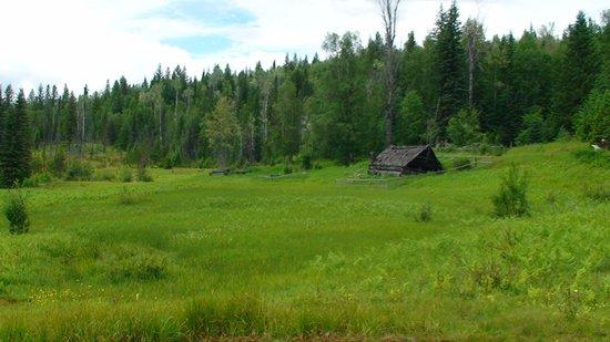 Moul Creek Lodge B & B: Wonderful nature!