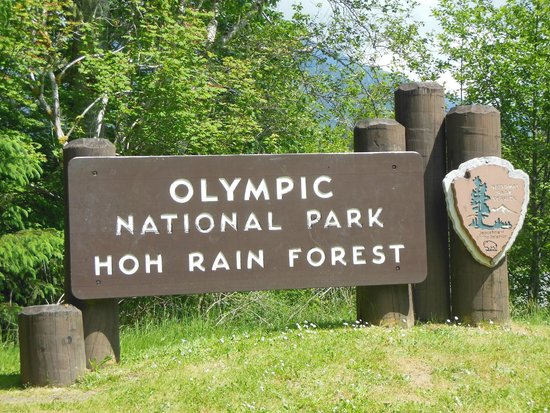 Giant Spruce Trees  Picture Of Hoh Rain Forest, Olympic. Hoop Clipart Signs Of Stroke. 3 Year Old Signs. Seating Signs. Proportional Signs. Crocodile Signs Of Stroke. Struggling Signs. Silver Signs. Anxiety Disorders Signs