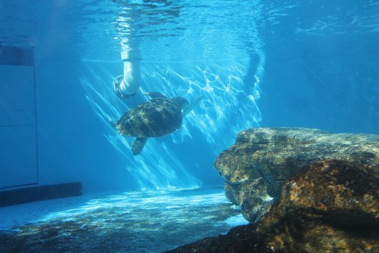 Marineland Dolphin Adventure: Sea turtle tank