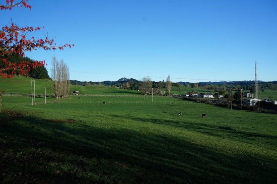 Waitomo Big Bird Bed & Breakfast: the farm