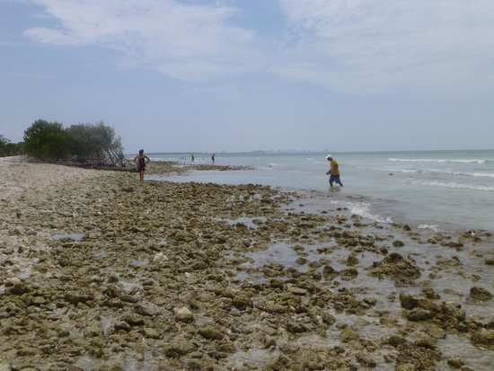 Honeymoon Island State Park : Rocky beach -- why bother?