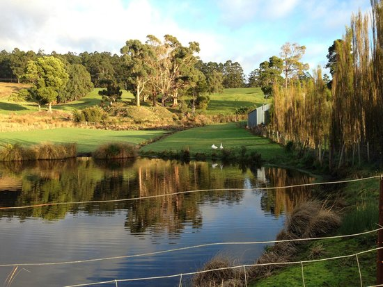 Port Arthur Villas: The pond outside my window