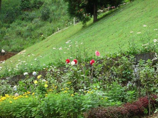 Bluefield Tea Gardens: Surroundings