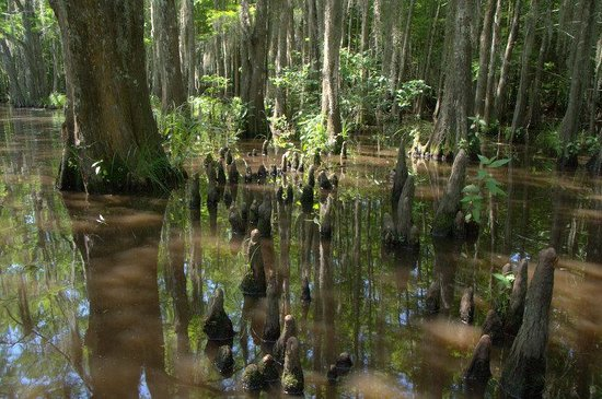Dr. Wagner's Honey Island Swamp Tours: In the Honey Island Swamp