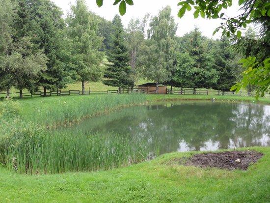 Agritur Malga Mortigola: laghetto dietro il ristorante