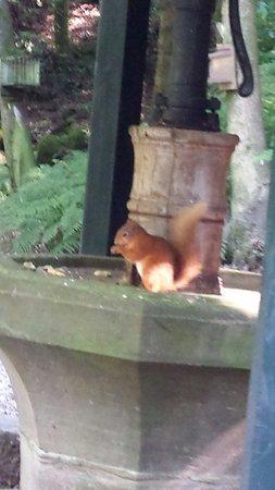 BEST WESTERN Shap Wells Hotel: Squirrel