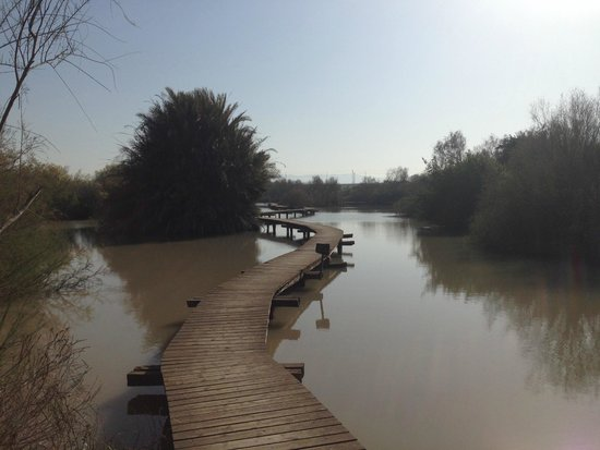 En Afek Nature Reserve: This bridge is the highlight of the park