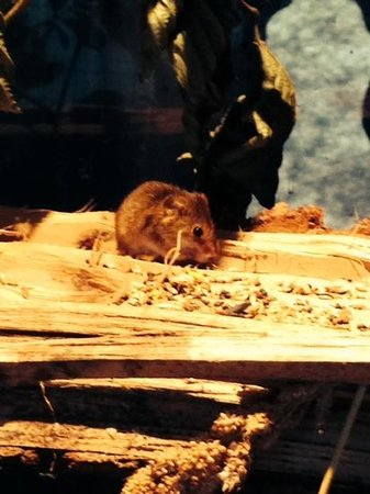 New Forest Wildlife Park: mouse
