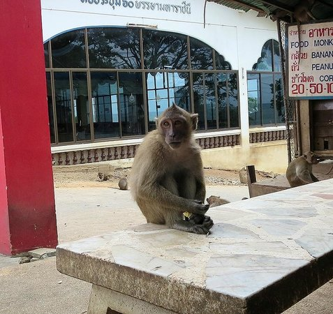 Chopsticks Hill (Khao Takiab): One of the more low-key monkeys at the temple