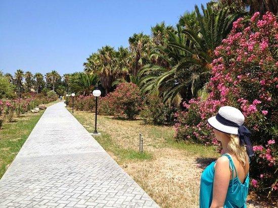 Apollon Hotel : hotel garden