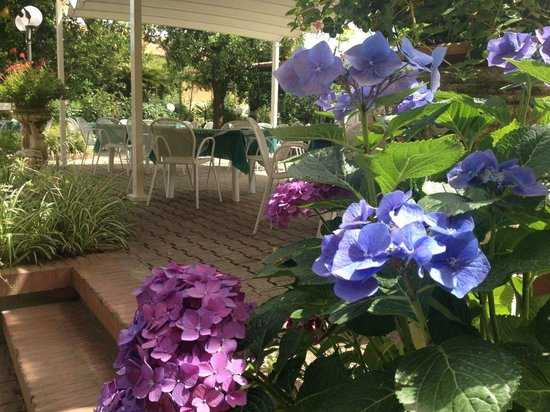 Hotel Girasole: In the garden where we had breakfast