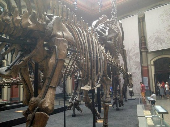 Museum fur Naturkunde (Natural History Museum) : Brachiosaurus