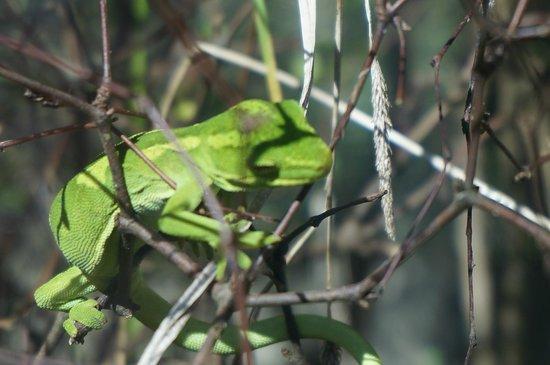 Otorohanga Kiwi House & Native Bird Park: green lizard