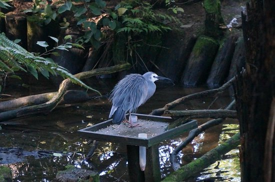 Otorohanga Kiwi House & Native Bird Park: bird