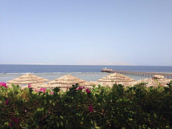 Cleopatra Luxury Resort: Beach bar view